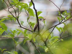 Tiny Bird, Nature, Animals, Naturaleza, Animales, Animaux, Animal, Animais, Nature Illustration