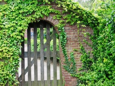 vine and gate
