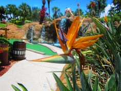JungleGolf Ft, Myers Beach, Florida Stuff To Do, Things To Do, Florida Beaches, Outdoor Fun, Golf Courses, Plant Leaves, Destinations, Activities, Vacation