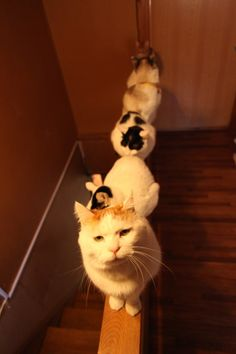 かご猫 Blog せいれつ