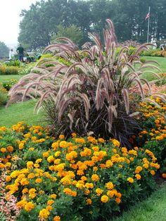 springbrunnengras-garten-studentenblumen-gelb-orange-rasenflaeche-beete