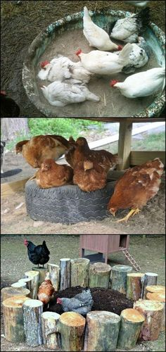 ♥ Pet Bird DIY Ideas ♥ Dust Bath Ideas for Your Chickens! Many people new to raising chickens are not aware of this, but it is one of the most important things chooks should have for overall health. It is as important as food and water! Chickens And Roosters, Pet Chickens, Chickens Backyard, Dust Bath For Chickens, Backyard Ideas, Food For Chickens, Rabbits, Chicken Coup, Diy Chicken Coop