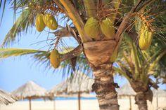 Goedkope vluchten naar Kaapverdie nu slechts 289,- - http://www.vakantieboef.nl/goedkope-vluchten-naar-kaapverdie-nu-slechts-289/