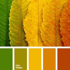 Bright and expressive color gamma associated with beautiful and a bit melancholy season of the year – autumn. Looking at these colors, it seems that you ca.