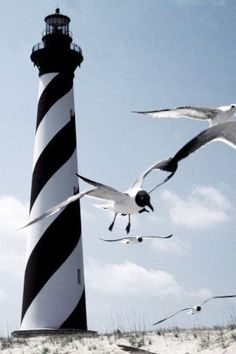 Lighthouse & seagulls