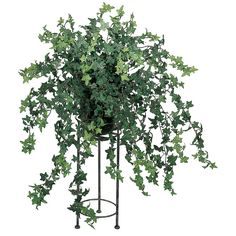 33 Flocked Mini English Ivy Bush [1126] : Decoplant Inc., The Art of... ❤ liked on Polyvore featuring home, home decor, floral decor, plants, flowers, backgrounds, decoration, fillers, silk flowers und faux flowers