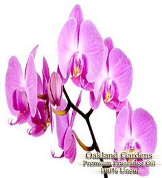Introducing Orchid Fragrance Oil  100 Pure Premium Grade Oil  UNCUT  Delicate classy and sweet  A heady intoxicating fragrance like no other Very exotic with notes of Ylang Ylang Rose Oriental Woods and Jasmine  By Oakland Gardens. Get Your Ladies Products Here and follow us for more updates!