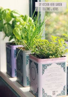 Hello Petal: DIY kitchen Herb Garden tins- Now I have a reason to buy and drink WAY more Harney's! Herb Garden In Kitchen, Kitchen Herbs, Diy Kitchen, Herbs Garden, Garden Projects, Diy Projects, Garden Ideas, Kitchen Window Sill, Tea Tins