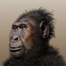 Su capacidad craneal era de alrededor de 515 cm3, la cara está muy ancha y redondeada, con unos incisivos muy pequeños, pero unos enormes molares y una cresta sagital a la que debían unirse unos grandes músculos masticadores. Su foramen magnum está más adelantado que en Australopithecus (como en el género Homo).