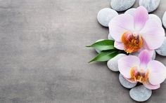 Wallpaper orchidee steine  Download wallpapers Pink orchids, spas, stones, orchids, tropical ...