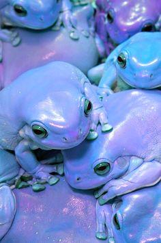 purple & blue frogs!!!  I love it!