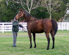 Grand Prayer(2001)(Filly) Grand Slam- Lyrical Prayer By The Minstrel. 4x3 To Northern Dancer, 5x5 To Native Dancer, 5(C)x5(C) To Bold Ruler. 13 Starts 3 Wins 5 Seconds 1 Third. $145,170. Won Without Feathers S. Dam Of Malibu Prayer.