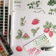 My strawberries by namwannpastel Floral Illustrations, Botanical Illustration, Watercolor Illustration, Watercolor Art, Sketch Books, Textile Design, Strawberries, Sketching, Journaling