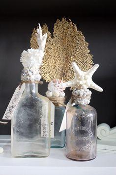 Old bottles, shells, coral, sea fan