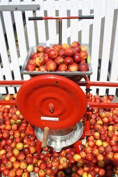 Æblepresser med æblekværn. Nordisk SelvForsyning Fruit, Vegetables, Food, Meal, The Fruit, Eten, Vegetable Recipes, Meals, Veggies