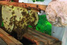 Lusaka  MÁS DE 6.500 apicultores de todo el país han sido capacitados y vinculado a los compradores de productos de las abejas para aumentar la producción y acceso al mercado de la miel.