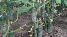 Cactus Plants, Solar, Flowers, Gardening, Culture, Plant, Embroidery, Cacti, Lawn And Garden