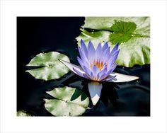 "The ""Ice Blue Water Lily"", 8x10 Giclée Fine Art Print, Floral Art Print, Flower Wall Decor"