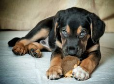 Tips for making your home safe for pets | The Press Democrat