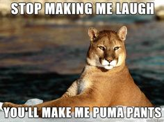 Funny pictures about Punny Puma. Oh, and cool pics about Punny Puma. Also, Punny Puma photos. George Carlin, Humor Animal, Animal Memes, Funny Animals, Funny Puns, Funny Stuff, Funny Humor, Hilarious Jokes, Mountain Lion