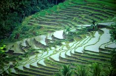 Google Image Result for http://ecologicalaquaculture.org/welcome/wp-content/uploads/2011/04/bali.jpg