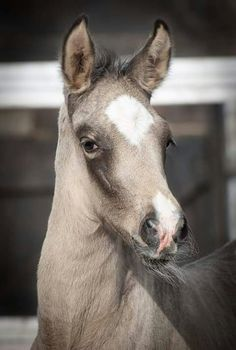 What a beautiful foal! In love with this coloring. #beautiful #stylemyride