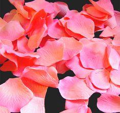 Coral Peach with Fuchsia Tip Rose Petals