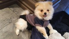 Cutest dog ever! Cutest Dog Ever, Cute Dogs, Jackson, Animals, Animais, Animales, Animaux, Animal, Dieren