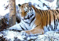 een tijger kan je tegen dingen beschermen