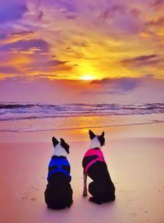 cape-san-blas-florida-pet-friendly-beach-vacation-2013-10