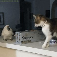 Cats Dont Fly