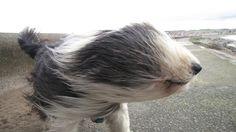 Windy!