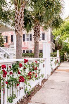 ***Charleston Roses, Charleston, SC