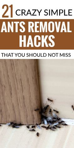 Household Cleaning Tips, House Cleaning Tips, Simple Life Hacks, Useful Life Hacks, Natural Bug Killer, Natural Spider Repellant, Ant Removal, Ant Spray, Diy Pest Control