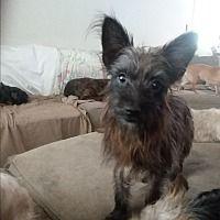 Inverness Fl Yorkie Yorkshire Terrier Meet Benji A Pet For Adoption Yorkie Puppy Yorkie Yorkshire Terrier Cute Puppy Breeds