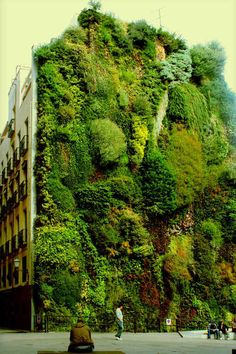 Vertical Garden, Madrid - The vertical garden in Madrid is 24 metres high and takes up one wall of the square in front of the building. It has 15,000 plants of 250 different species and has become a drawing card for the area. (outstandingplaces.com)