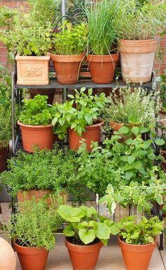 64 Container Gardening Patio Small Es
