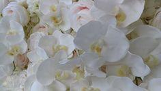 Unsere Kim Luxury Blumenwand ist eine florale Pracht aus Real Touch-Hortensien und Orchideen vereint mit weissen und zartrosa gefärbten Rosen, die sich zu einer magischen Foto Kulissenwand zusammenfügen.   Sie können bei Blumenwandschweiz hochwertige Blumenwände mit realistischem Aussehen schweizweit mieten.  Besuchen Sie unsere Website für eine Reservierung.          #blumenwand #blumenwandmieten, #flowerwall, #flowerwallmieten, #hochzeit, #hochzeitsdekoration, #swisswedding… About Me Blog, Flowers, Plants, Creme, Ideas, Pink, Peonies, Hydrangeas, Romantic Backgrounds