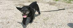Mijn hond Lucca