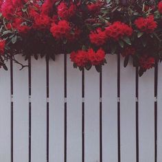 background, flowers, grunge, iphone wallpaper, love