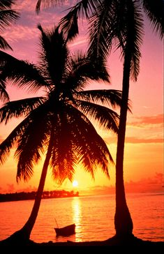 How To Take Amazing Sunset Photos. Sunset Wallpaper, Wallpaper Backgrounds, Amazing Sunsets, Sunset Photos, Travel Photography, Sunset Photography, Palm Trees, Scenery, Ocean