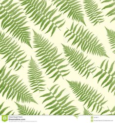 fern illustration - Google Search
