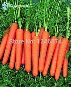 300/가방 다섯 인치 인삼 당근 씨앗, 당근 씨앗, 화분 과일 야채 씨앗 홈 정원 심기 sementes