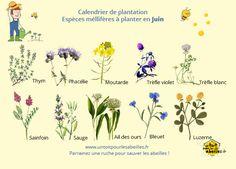 Flower Patch, Plantation, Cut Flowers, Permaculture, Greenery, Nature, Recherche Google, Voici, Shabby