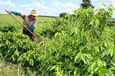 JORNAL REGIONAL EXPRESS: Cadastro de imóveis rurais vai até cinco de maio