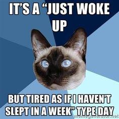 chronic fatigue, chronic illness cat
