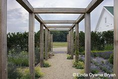 Rustic barn timber arbor with gravel path and red cedar hedges, lovely simplicity.