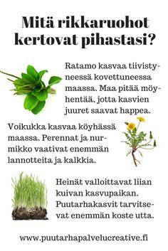 Rikkaruohot antavat osviittaa siitä, mikä puutarhassasi on pielessä. Liian tiivistynyt, ravinneköyhä tai paahteinen maa? www.puutarhapalvelucreative.fi