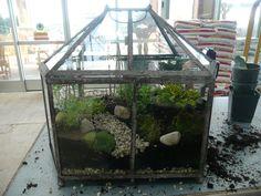 Lets Grow: Fairy Garden Terrarium