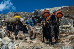 Refuel has in Everest region
